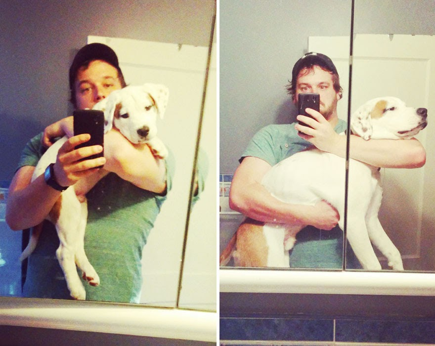 dogs-before-and-after (11)