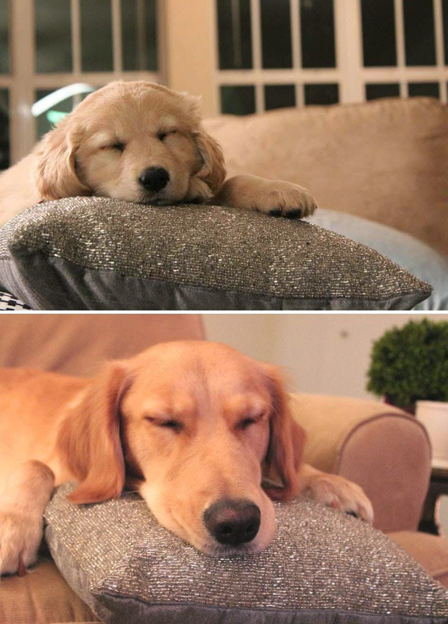 dogs-before-and-after (13)