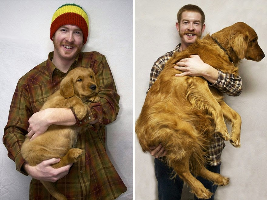 dogs-before-and-after (14)