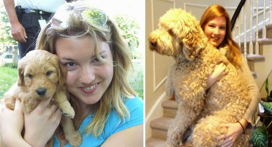 dogs-before-and-after (2)
