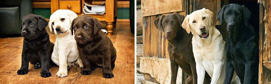 dogs-before-and-after (3)