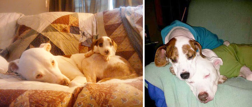 dogs-before-and-after (4)