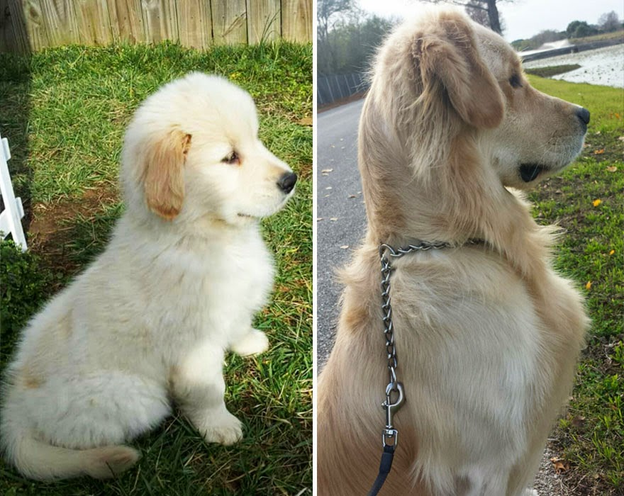 dogs-before-and-after (9)